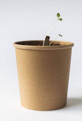 volta_rhoeco_organic-tea_rhoeco_plantit1