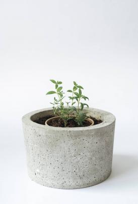 volta_rhoeco_organic-tea_rhoeco_plantit2