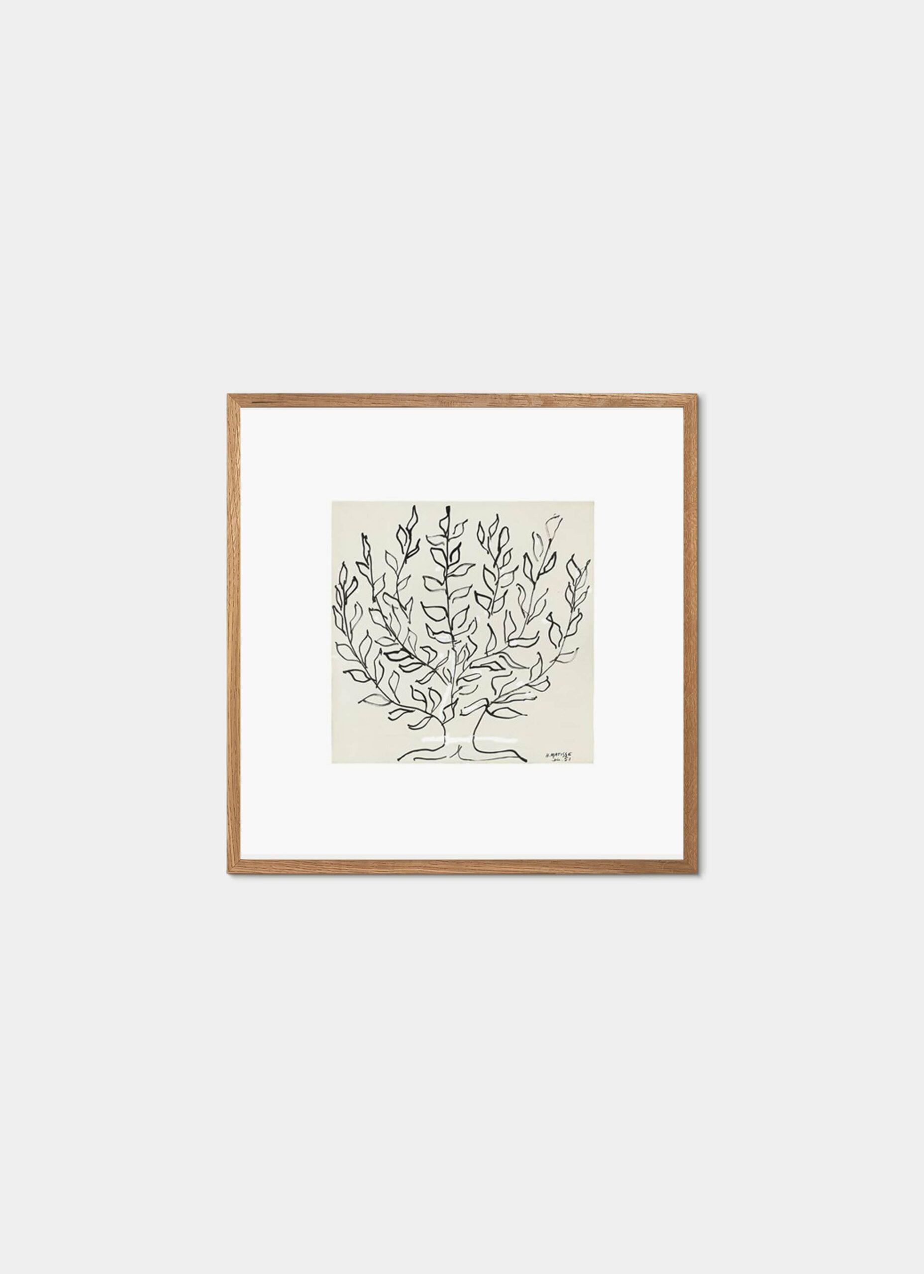 Matisse - Art Print - La Platane - 50x50cm