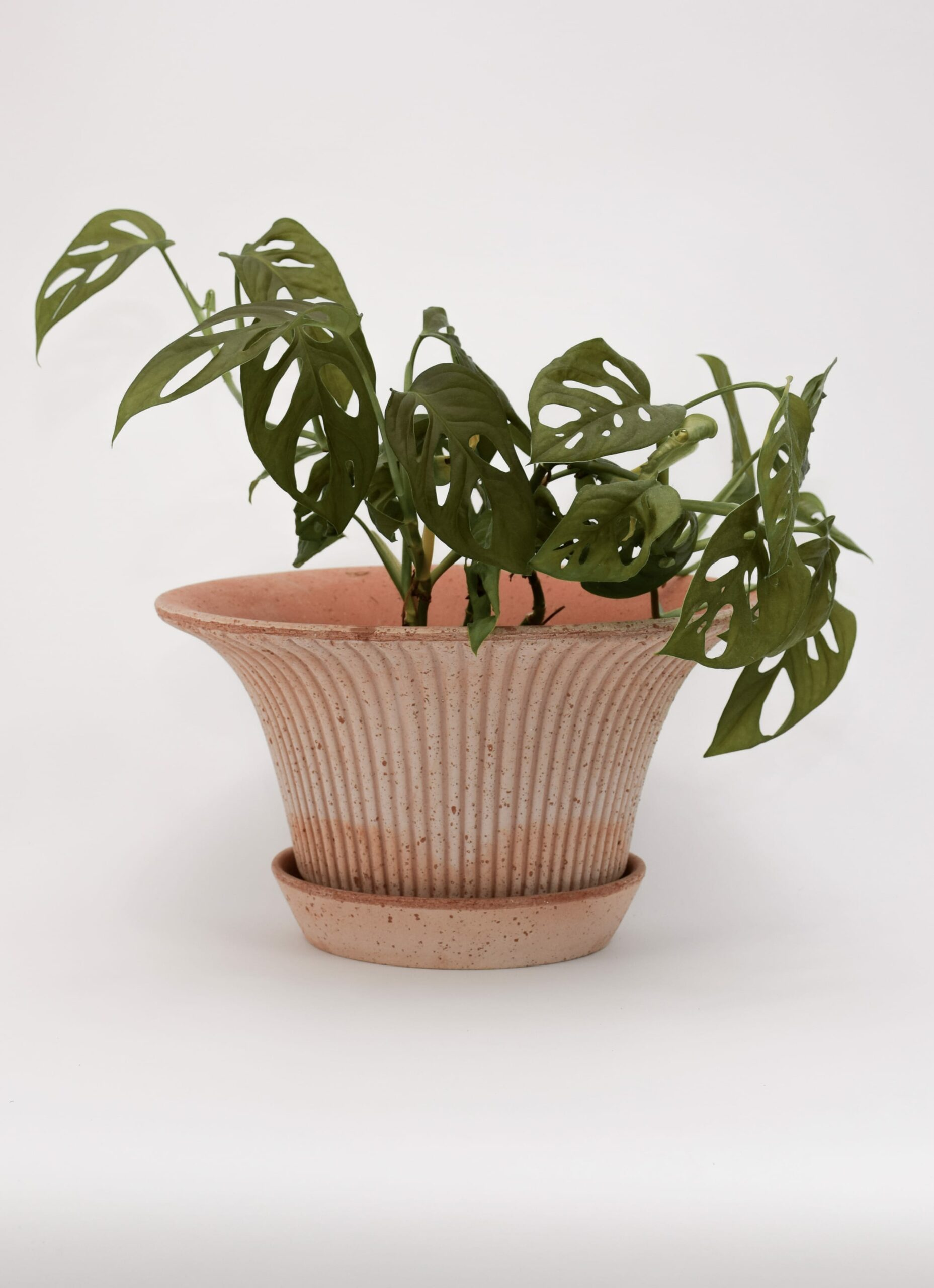 Bergs Potter - Plant Pot with Saucer - Daisy - natural - two sizes